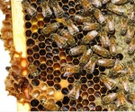 Figure 10: Elaborate Hive Emerges from Bee-agent Interaction